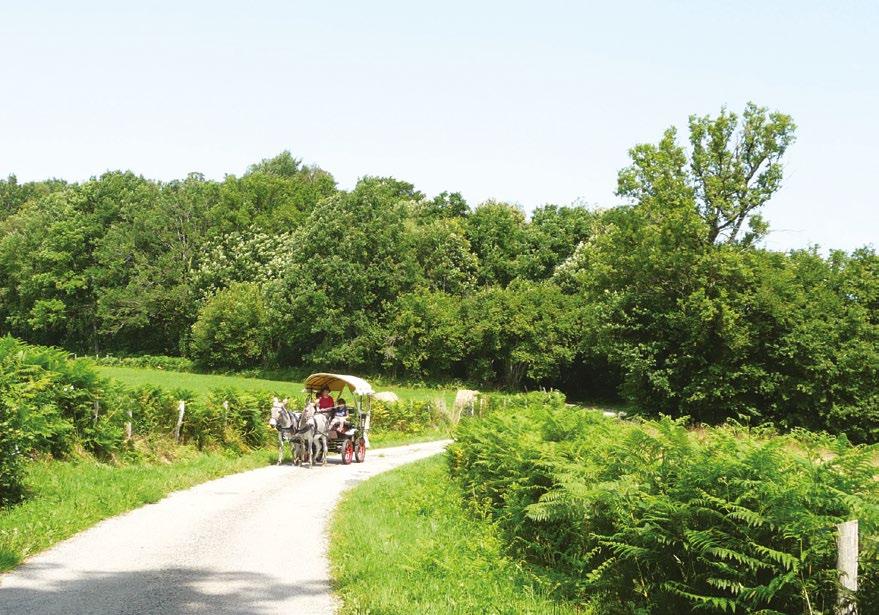 Attelage haute Corrèze